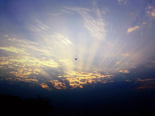 Photograph - Sunrise by Atullya N Srivastava