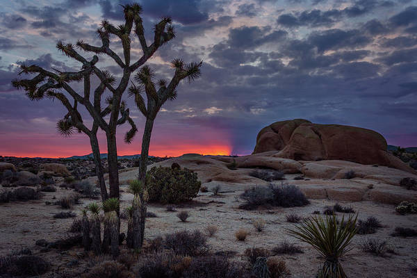 Photograph - Sunrise Behind The Joshua Tree by Rick Strobaugh