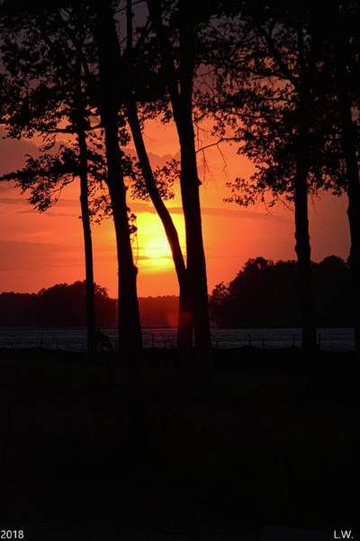 Photograph - Sunrise Beyond The Trees by Lisa Wooten