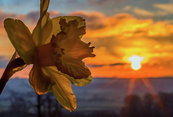 Photograph - Sunrise Flower  by Cliff Norton