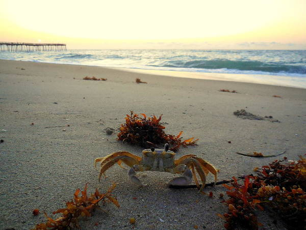 Standup Paddleboard Photograph - Sunrise Ghost Crab 2 7/29 by Mark Lemmon