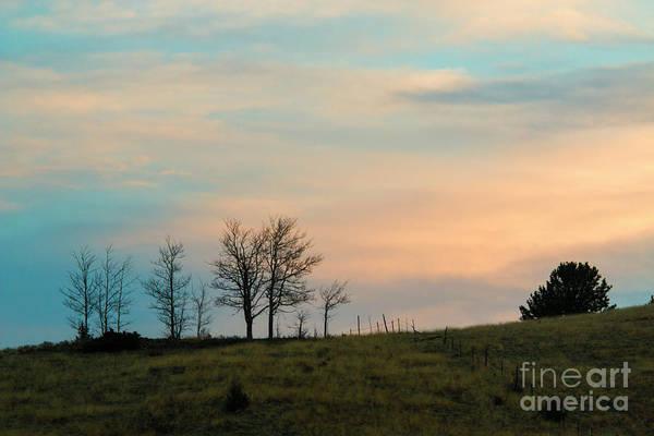 Photograph - Sunrise Grove by Steve Krull