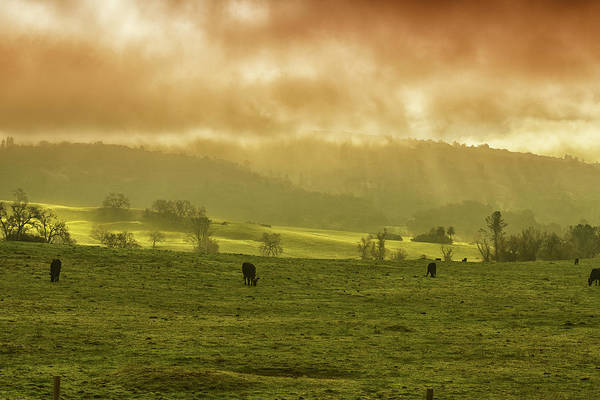 Photograph - Sunrise In Foggy Pasture by Frank Wilson