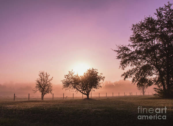 Photograph - Sunrise In The Country by Andrea Anderegg