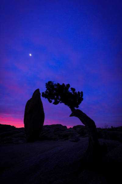 Photograph - Sunrise Joshua Tree by TM Schultze