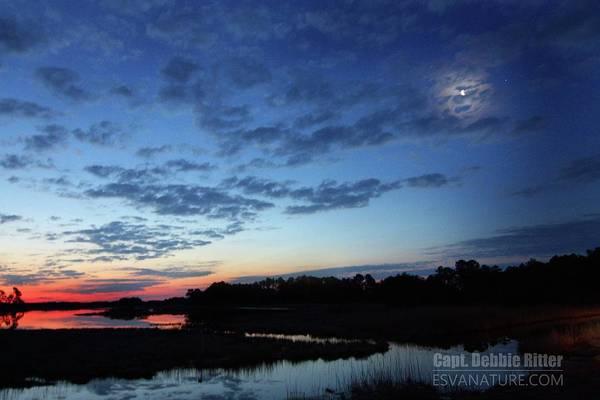 Photograph - Sunrise Marsh 9222 by Captain Debbie Ritter