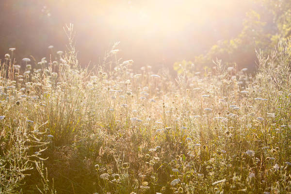Photograph - Sunrise Meadow by SR Green