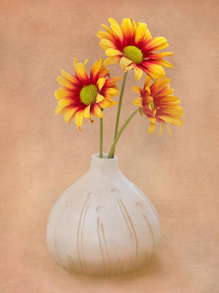 Blooming Wall Art - Photograph - Sunrise Mums by Tom Mc Nemar