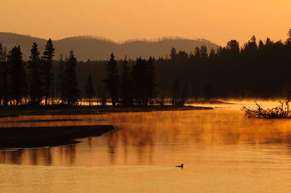 Sunrise Near Fishing Bridge In Yellowstone Art Print