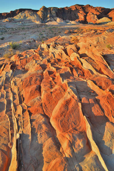 Photograph - Sunrise Of Waves Of Sandstone In Valley Of Fire by Ray Mathis
