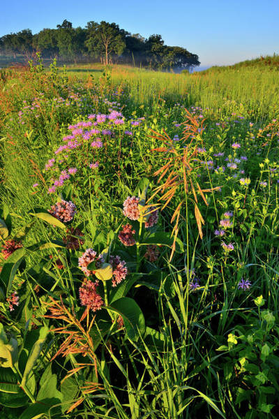 Photograph - Sunrise On Lost Valley Prairie In Glacial Park by Ray Mathis
