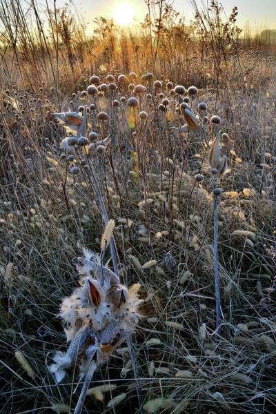 Photograph - Sunrise On Prairieview Prairie by Ray Mathis