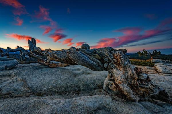 Photograph - Sunrise On The Jeffrey Pine by Rick Berk