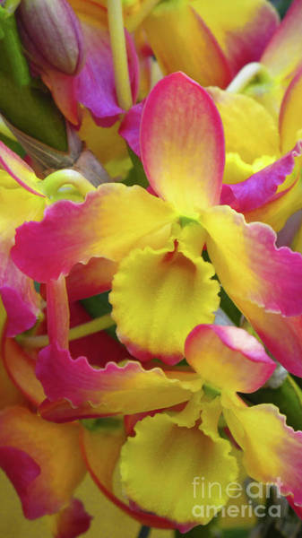Wall Art - Photograph - Sunrise Orchids by Ruth Jolly