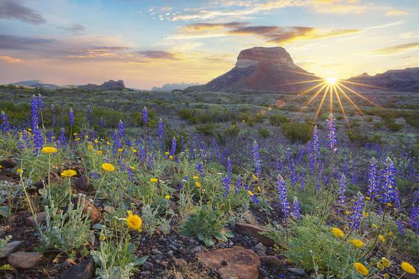 Texas Bluebonnet Photograph - Sunrise Over Big Bend Bluebonnets by Rob Greebon