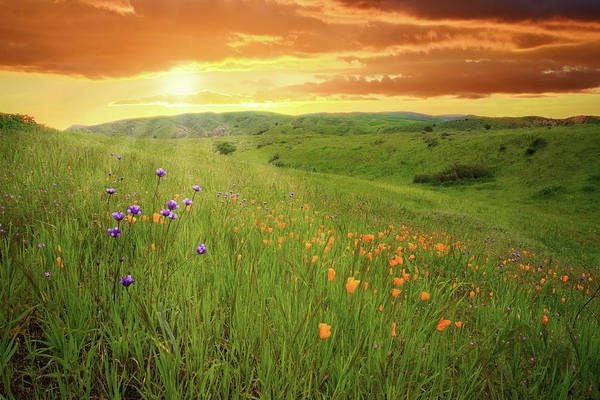 Photograph - Sunrise Over Happy Camp Wildflowers by Lynn Bauer