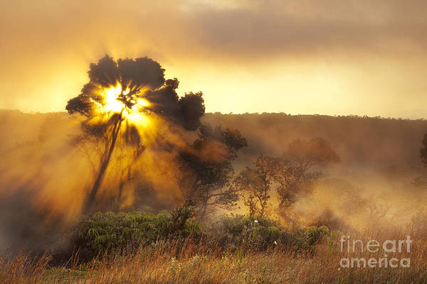 Photograph - Sunrise Over Hawaii Volcano Steam Vents by Charmian Vistaunet