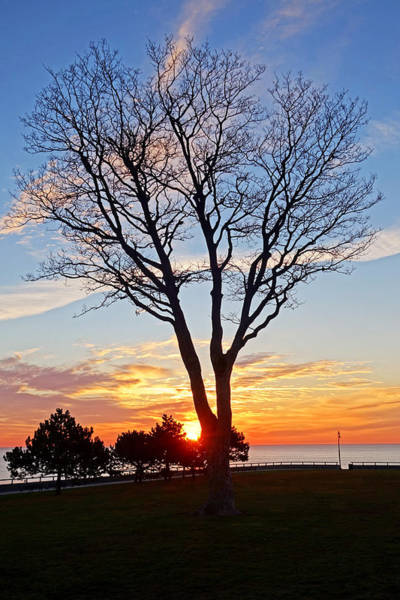 Photograph - Sunrise Over Red Rock Park Lynn Shore Drive Tree by Toby McGuire