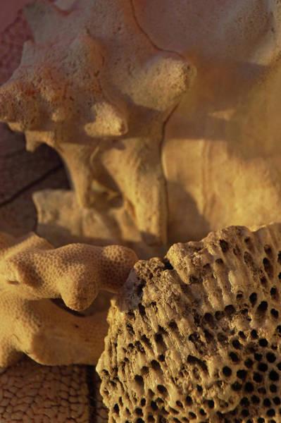 Wall Art - Photograph - Sunrise Over Seashells by Brandy Herren