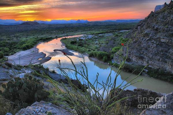 Photograph - Sunrise Over The Ocatillo by Adam Jewell