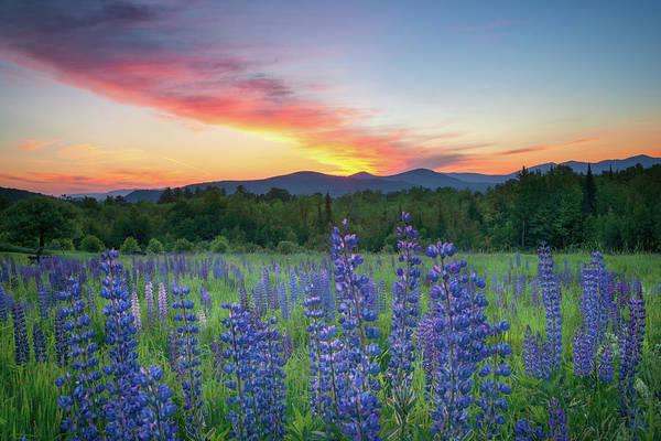 Lupines Photograph - Sunrise Over The Ridge by Darylann Leonard Photography