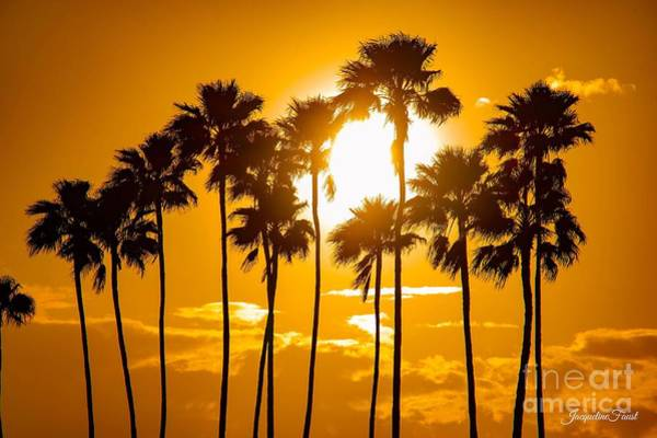 Photograph - Sunrise Palms by Jacqueline Faust