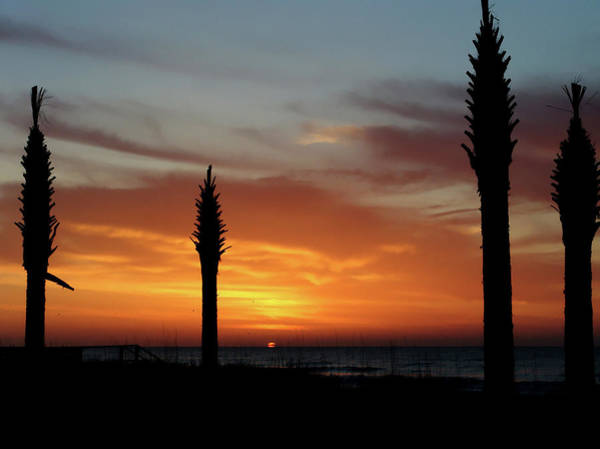 Photograph - Sunrise Palms by Ree Reid