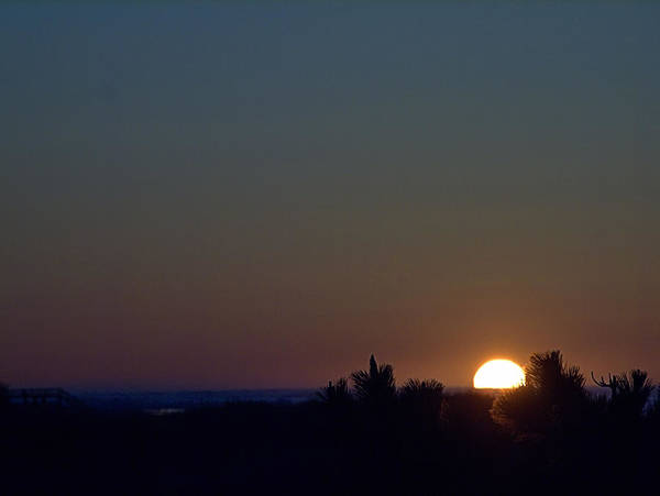 Photograph - Sunrise Pine by  Newwwman