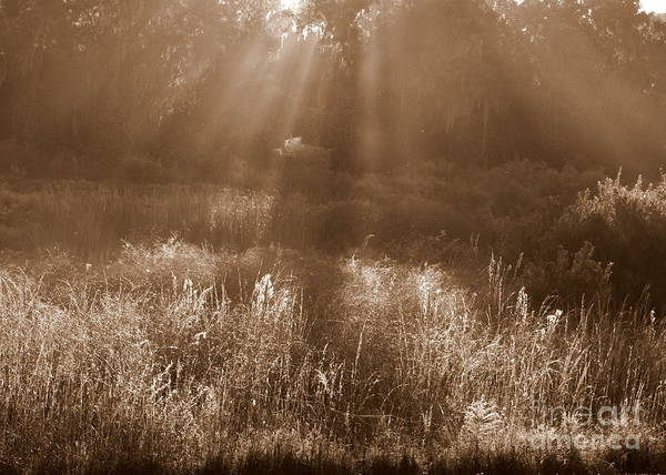 Photograph - Sunrise Sepia by Carol Groenen