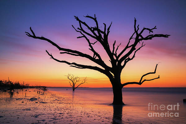 East Bay Photograph - Sunrise Silhouette At Botany Bay Island by Michael Ver Sprill