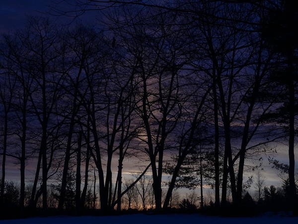 Photograph - Sunrise Silhouette by Mary Vinagro