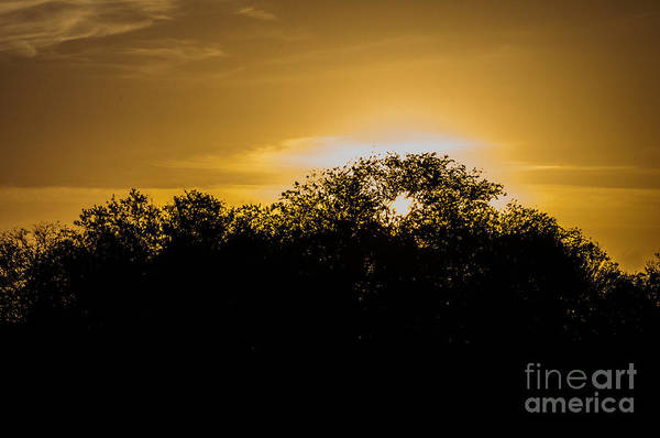 Photograph - Sunrise Silhouette by Photos By Cassandra
