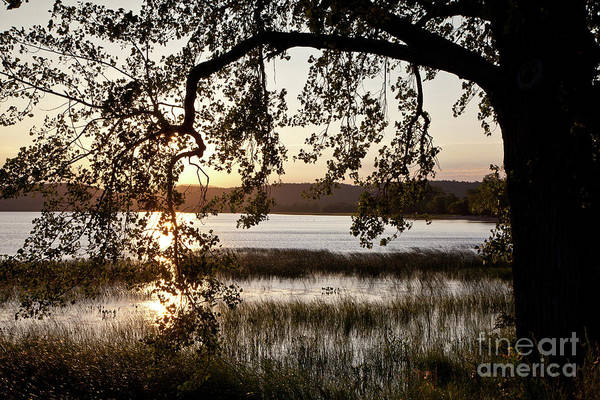 Wall Art - Photograph - Sunrise Silhouette by Susan Cole Kelly