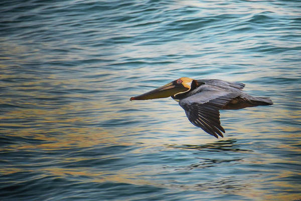 Photograph - Sunrise Skimming by Jai Johnson