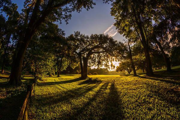 Photograph - Sunrise Spanish Moss Shadows by Chris Bordeleau
