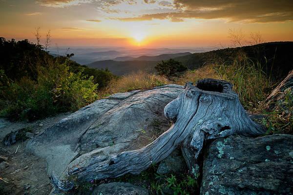 Photograph - Sunrise Stump by Ryan Wyckoff