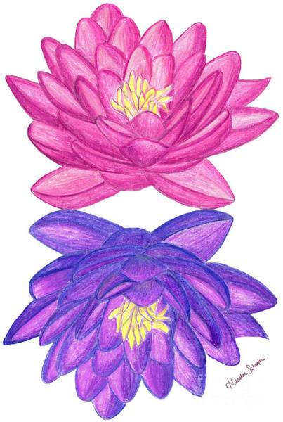 Drawing - Sunrise Sunset Lotus by Heather Schaefer