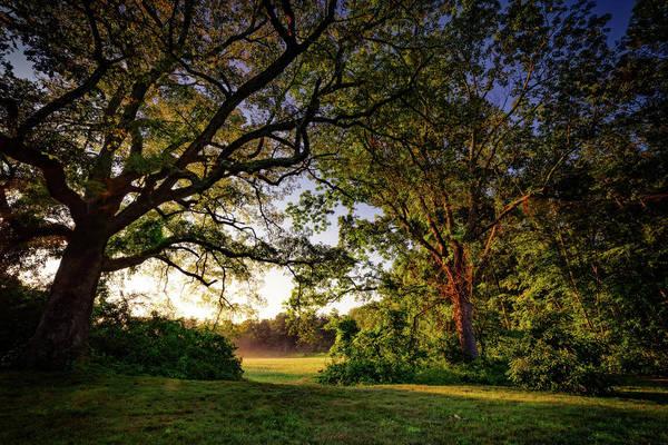 Photograph - Sunrise Through The Trees by Rick Berk
