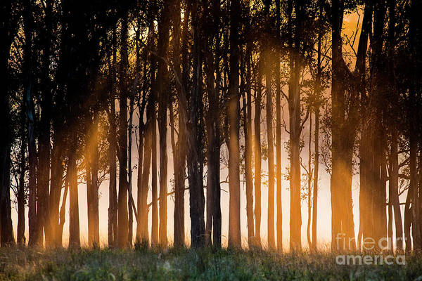 Wall Art - Photograph - Sunrise Through Trees by Sheila Smart Fine Art Photography