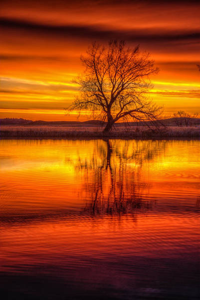 Photograph - Sunrise Tree by Fiskr Larsen