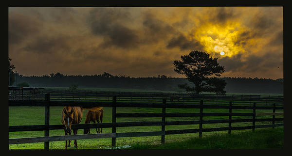 Photograph - Sunrise With Horses by James Hennis