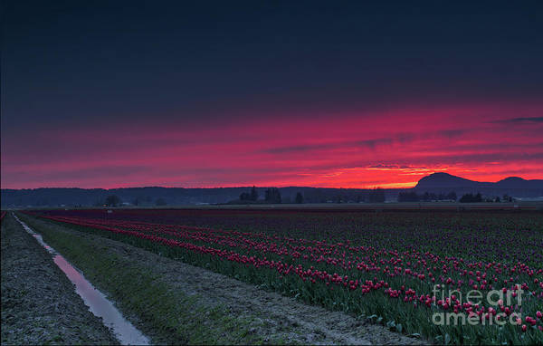 Wall Art - Photograph - Suns Burning Conclusion In Skagit by Mike Reid