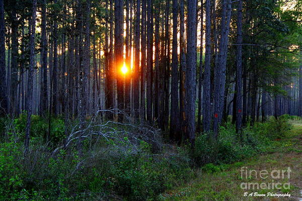 Photograph - Sunset Along The Florida Trail - St.marks by Barbara Bowen