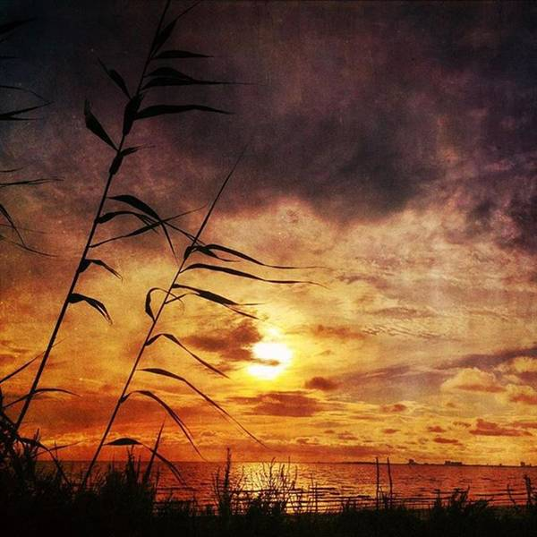 Sunset Among The Reeds #sunset Art Print