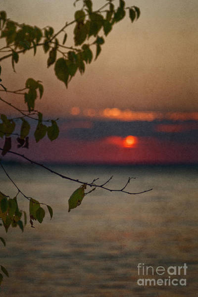 Wall Art - Photograph - Sunset And Branches by Margie Hurwich