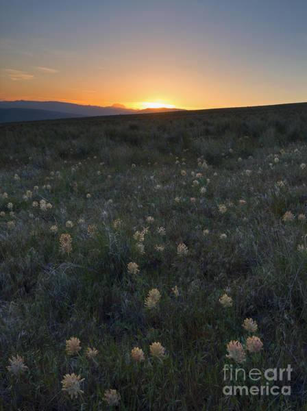 Wall Art - Photograph - Sunset And Clover by Mike Dawson