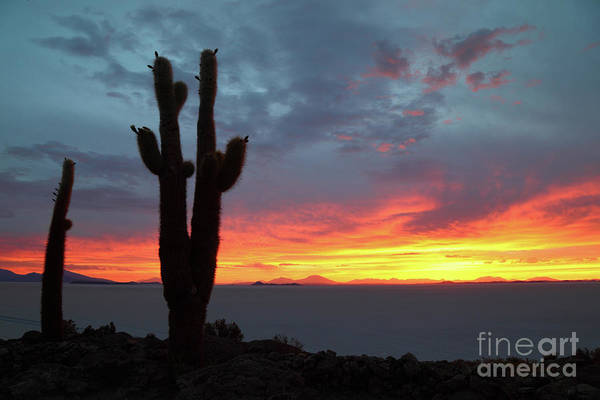 Photograph - Sunset And Forked Cactus Salar De Uyuni Bolivia by James Brunker