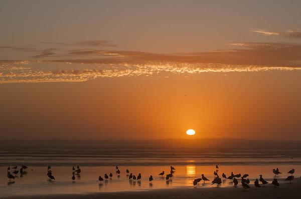 Photograph - Sunset And Gulls by Robert Potts