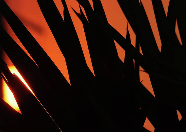 Photograph - Sunset And Leafs by Cliff Norton