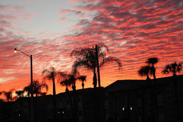 Photograph - Sunset And Palm Trees by Susan Jensen